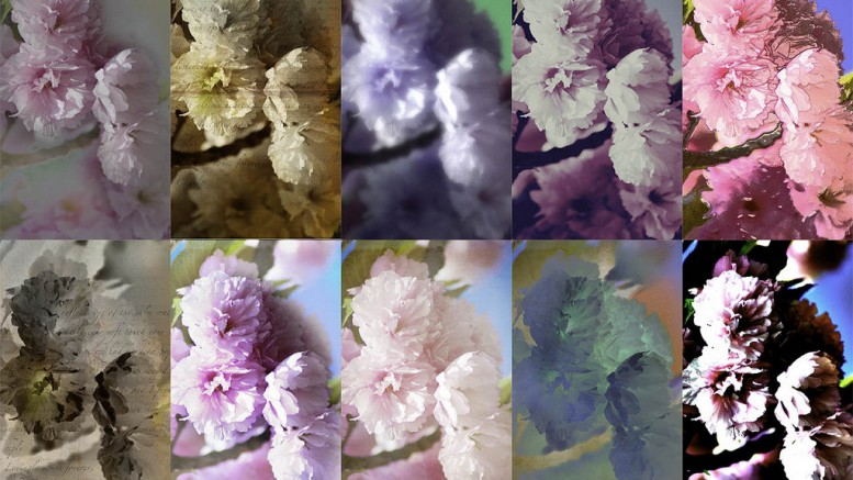 """Spring Blossom collage variations""  (CC BY-NC-ND 2.0) by Timothy K Hamilton  on Flickr"
