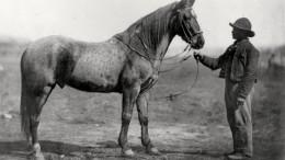 En man leder en häst