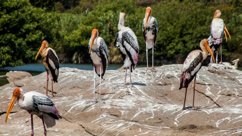 En grupp fåglar
