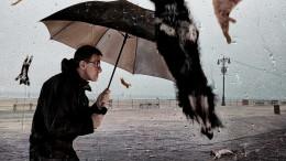 Hundar och katter som regnar ned från himlen