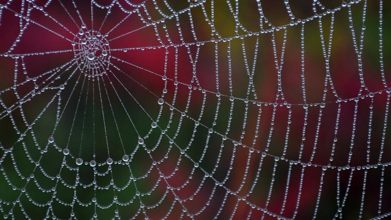 Ett spindelnät