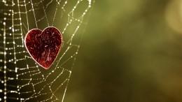 Ett hjärta i ett spindelnät