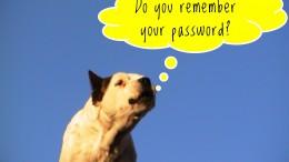 En hund som undrar om man glömt sitt lösenord