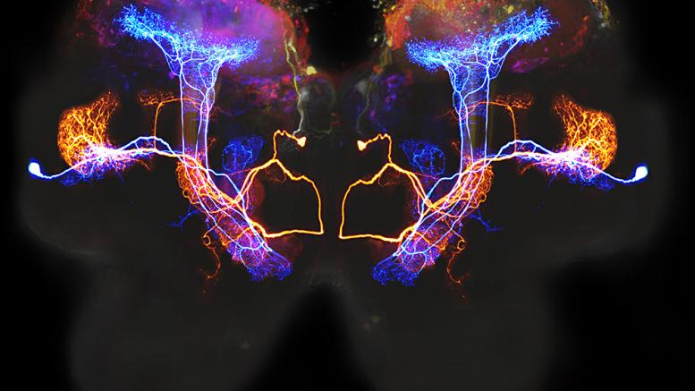 Delar av en hjärna